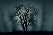 nature-night-dark-tree